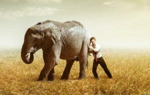 Ein Mann versucht einen Elefanten zu schieben