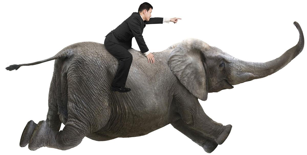 Wenn Verstand und Emotion im Einklang sind, können Elefant und Reiter gemeinsam buchstäblich fliegen