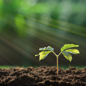 Ein kleiner Baum als Symbol für Wachstum und Potential
