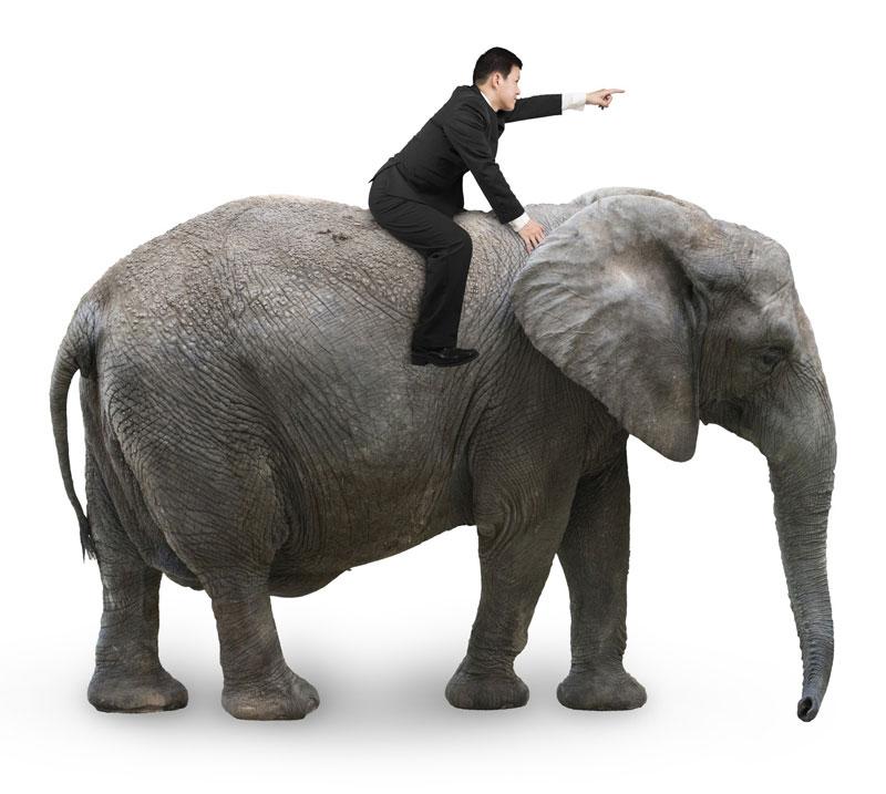 Der Elefant und sein Reiter symbolisieren die Gegensätze Verstand und unbewusste Emotion