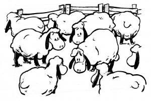eine Herde Schafe schaut ängstlich. Ein Schaf hat große Sorge, ausgegrenzt zu werden.